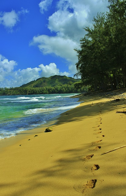 beach-276414_640
